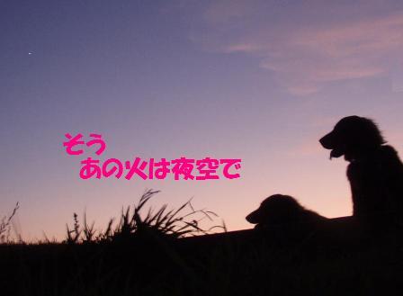 コピー ~ コピー ~ 05AUG10 211sasori