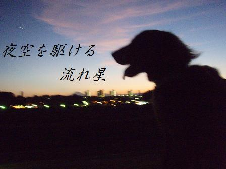 コピー ~ A205AUG10 281