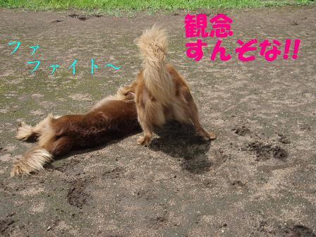 CEコピー ~ 10AUG10 091