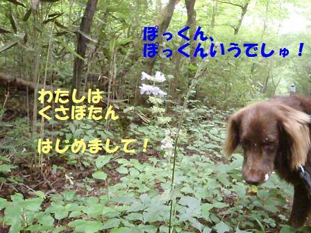 29AUG10 037flower