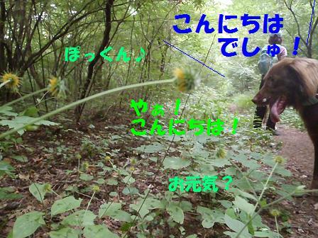 29AUG10 042flower