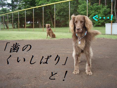 a15JUN10 001kuishibari2