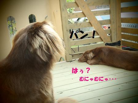 コピー (2) ~ J13OCT10 049shura