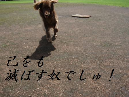 C10AUG10 0147sumurais