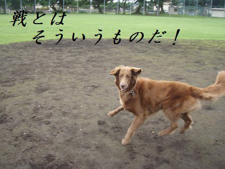 D07JULY10 0067sumurais