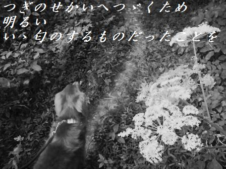 D29AUG10 064aomori