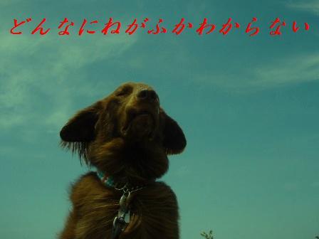 E27JULY10 269aomori