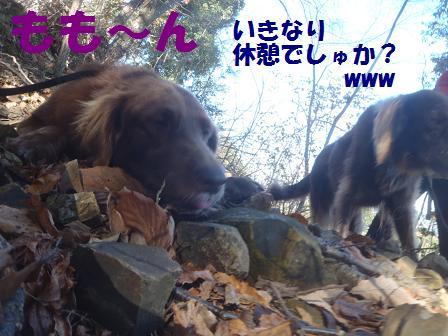 04DEC10 009matsu