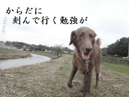 C22OCT11 038inasaku