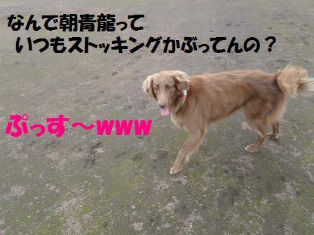 01SEP11 029ASASHORYU
