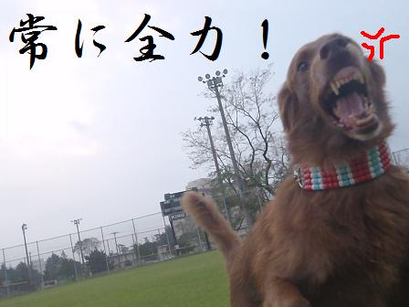 13OCT11 165zenryoku
