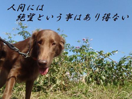 08DEC11 087dazai