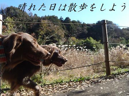 C13DEC11 040daigaku