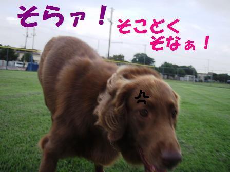 ROSHI01a.jpg