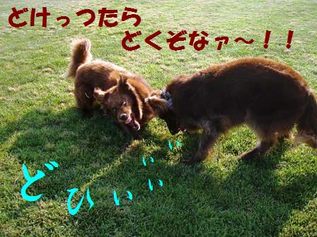 ROSHI03.jpg