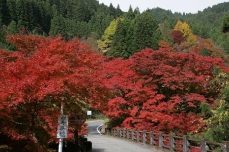 東大芦川の秋
