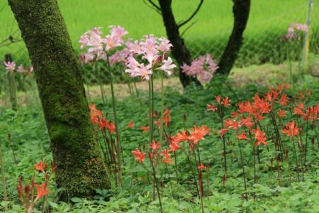 四季の森星野の夏