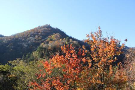 いろは坂の秋