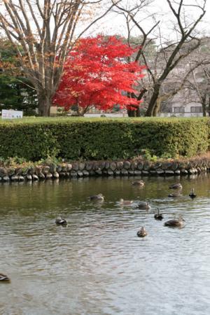 烏ヶ森公園の秋
