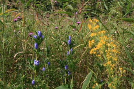 駒止湿原の初秋