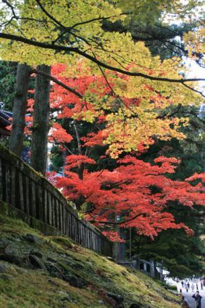 日光市内の紅葉