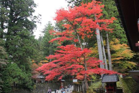 日光山内の秋