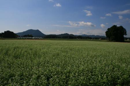大久保地区のそば畑