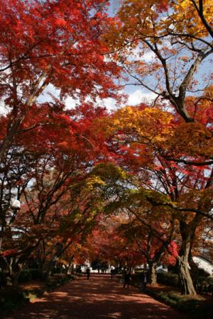大山参道の秋2