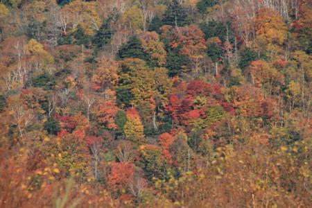 栗山の紅葉