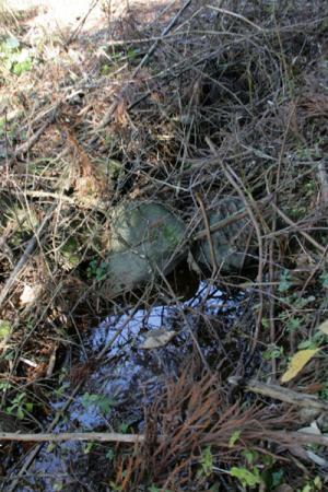 田川の水源