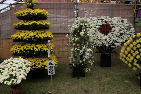 中央公園菊花展
