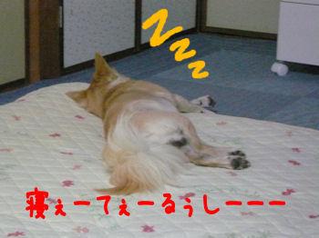 komusan_0802_002