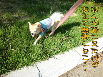 komusan_0813_005