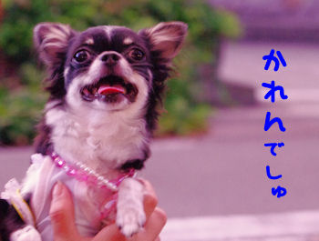 komusan_0830_2