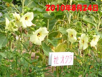 komusan_0902_002