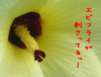 komusan_0902_003