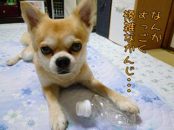 komusan_0902_006