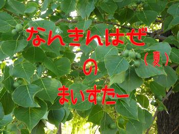 komusan_0902_008