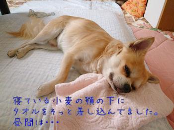 komusan_0920_004