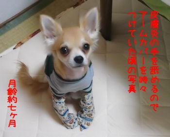 komusan_0920_008