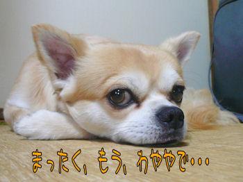 komusan_0921_002