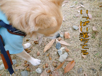 komusan_0928_004