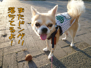 komusan_0929_001