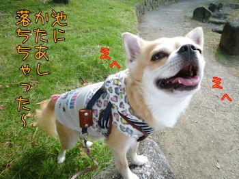 komusan_1012_003-02