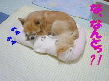 komusan_1021_001