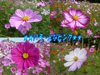 komusan_1023_02-000