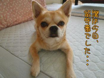 komusan_1023_000