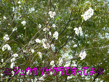 komusan_1028_001