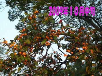 komusan_1025_003