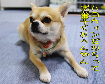 komusan_1030_001